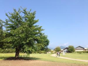 美術館の木