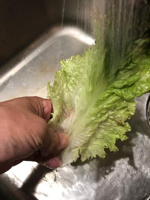 レタスを洗う